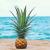 Maui Habit – усмихни деня си!